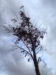 árbol muerte