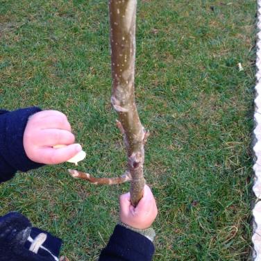 La inocencia de un niño, que intenta pegar en el árbol la hoja que acaba de ver caer en otoño