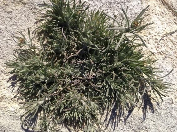 planta-acuatica-1