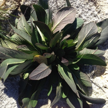 planta-acuatica-2