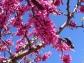 primavera4
