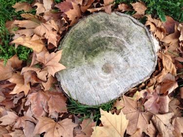 tronco-hojas-otono